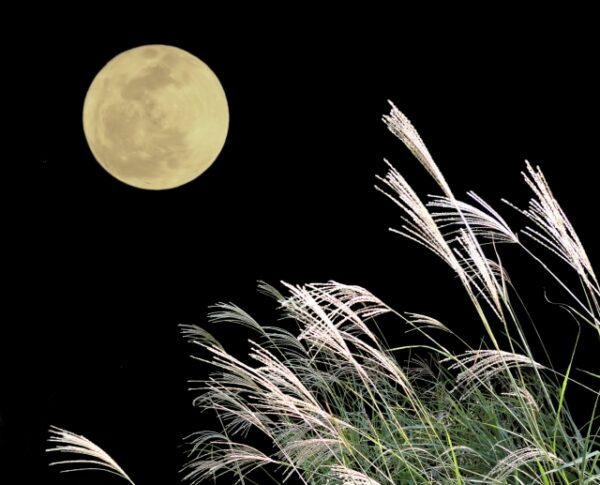 今夜は中秋の名月